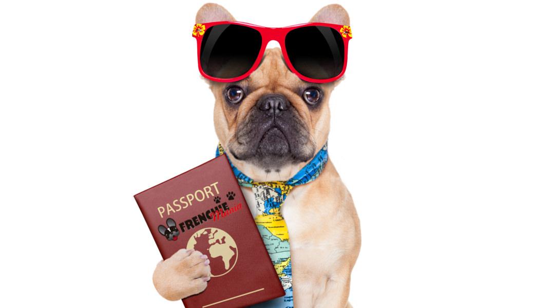 7 tips para viajar con tu mascota
